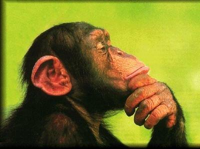 http://www.blogscienze.com/wp-content/uploads/2007/12/matematica-neuroscienza-operazioni-scimmie-studenti-duke-university.jpg